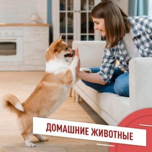 Домашние животные не только приносят радость, но и вносят коррективы в размеренную жизнь. Как…